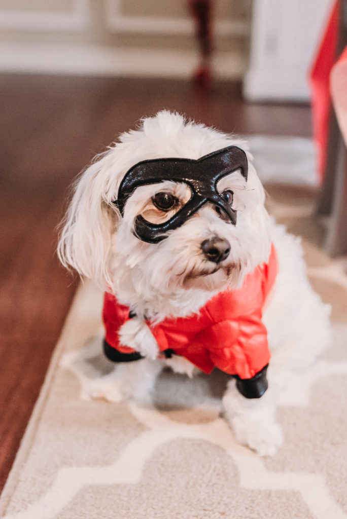 Brianna K's dog Colie dressed in an Incredibles costume for Landon's 4th b birthday party HOW TO PLAN AN INCREDIBLE BIRTHDAY PARTY | BE YOUR OWN PARTY PLANNER CHECKLIST!  Brianna K bitsofbri
